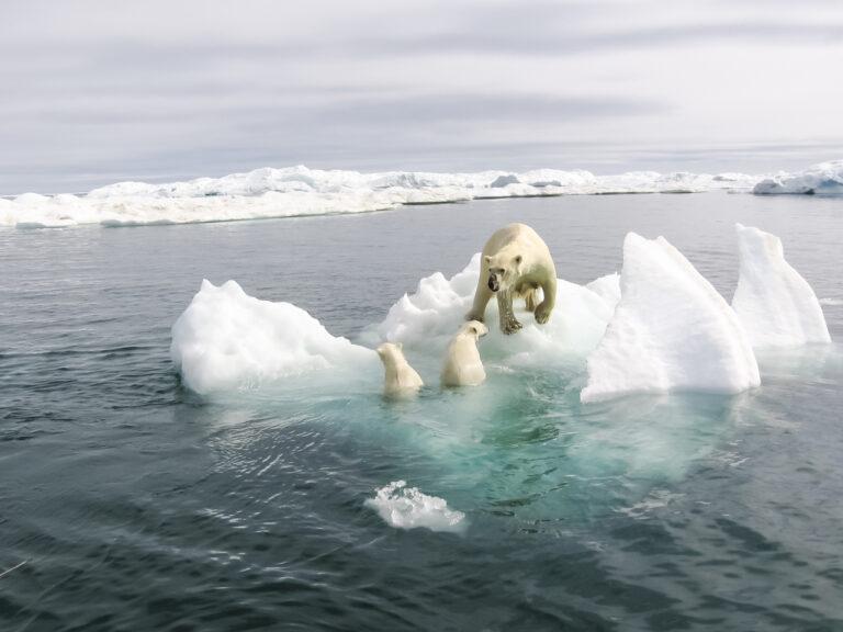 Klimawandel Arktis Eisbären gogreen.jpg